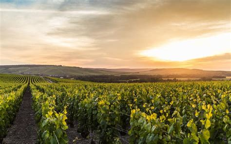 Champagne guide: where to eat, drink and sleep in France's