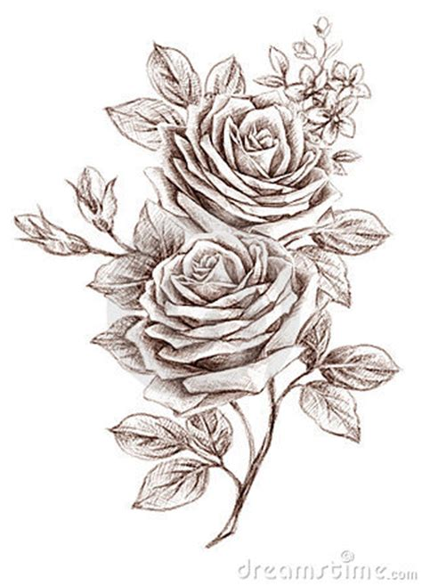 Freehand Drawing Rose 01 Stock Photos - Image: 19168693