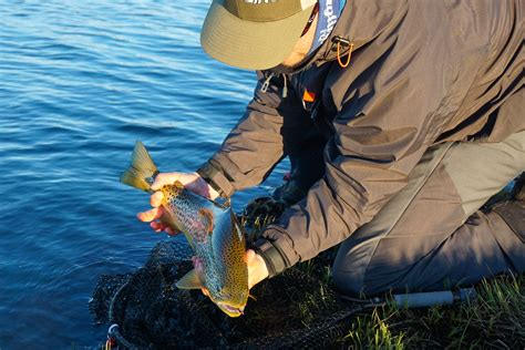 Ice age trout in Iceland