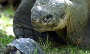 These animals outlive humans: Top 10 longest living