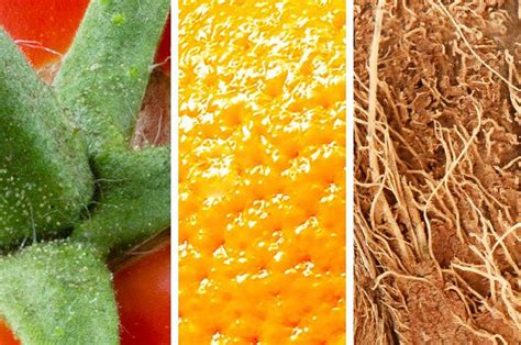 Can You Pass This Surprisingly Difficult Close-Up Fruit