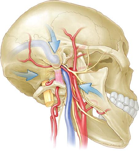 The rectus capitis lateralis and the condylar triangle
