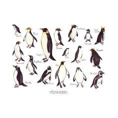 all the different kinds of penguins ! ! ! Love it